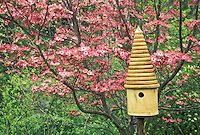 Lathe turned ringed birdhouse of hackberry by pink dogwood tree, Conus florida