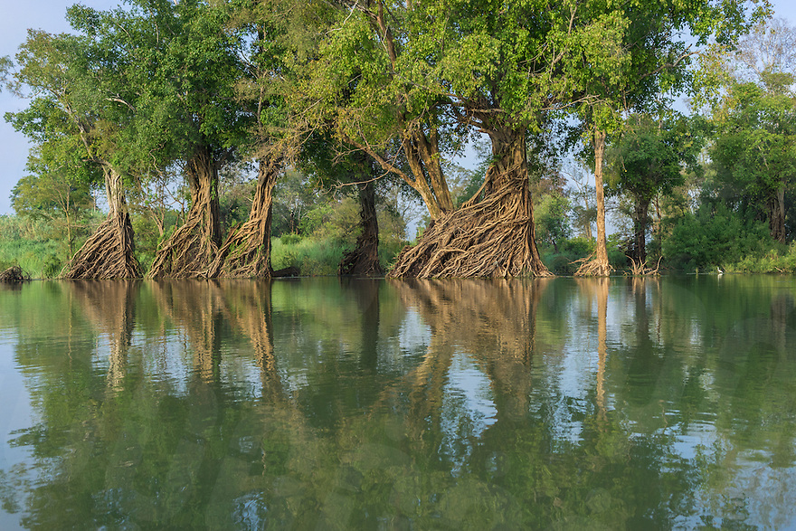 April 9, 2014 - Stung Treng (Cambodia). A view of the flooded forest inside the Ramsar protected area. © Thomas Cristofoletti