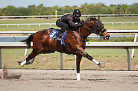 #97Fasig-Tipton Florida Sale,Under Tack Show. Palm Meadows Florida 03-23-2012 Arron Haggart/Eclipse Sportswire.