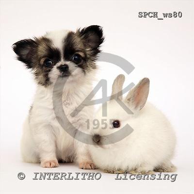 Xavier, ANIMALS, fondless, photos, SPCHWS80,#A#