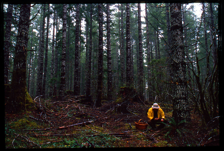 Jack Czarnecki harvesting wild chanterelles in the Oregon Coast Range