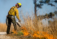 NWA Democrat-Gazette/JASON IVESTER<br /> Daniel Sherry helps start a fire line Thursday, March 2, 2017, for a prescribed burn at Hobbs State Park-Conservation Area. The burn covered 25 acres near the intersection of Highway 12 and Highway 127.