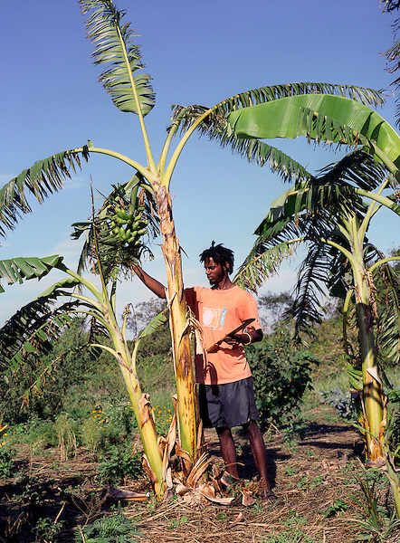 ST. ELIZABETH, JAMAICA : Jamaican organic farmer Marion Campbell works his farm . Campbell is a member of the Treasure Beach Ital  Farmers Association. Round Hill Farm, Treasure Beach, St. Elizabeth Parish, Jamaica. West Indies.