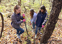 Students worked at removing invasive species of plants at Cool Creek Park in Westfield.  (L-R) Erica Huncklen, Maya DeCraene and, Olivia Comao