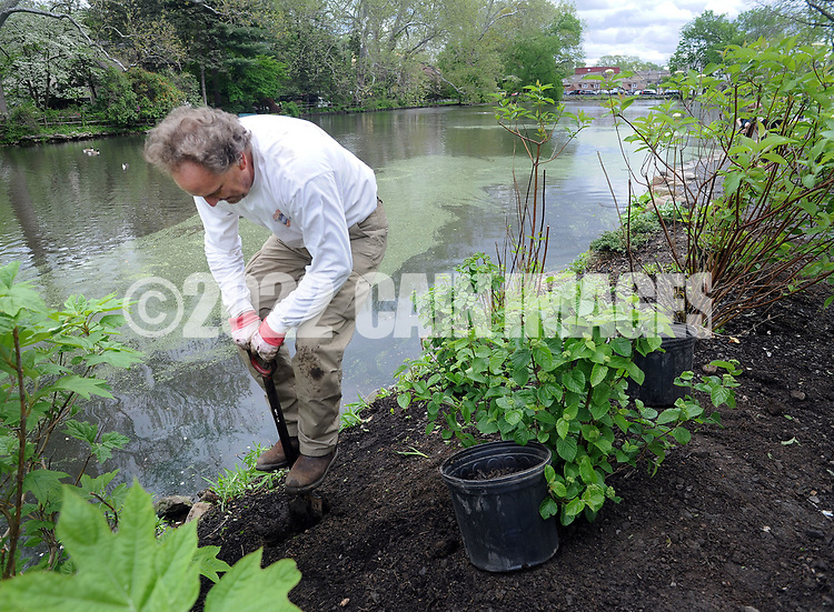 Mark Kearney, of Yardley, Pennsylvania digs a hole for some shrubs during a community cleanup of Lake Afton to provide some relief for the algae-plagued and mucky man made lake Saturday, May 6, 2017 at Lake Afton in Yardley, Pennsylvania. (WILLIAM THOMAS CAIN / For The Philadelphia Inquirer)