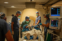 San Francisco, California, January 6, 2011 - Dr. Philip Starr, neurosurgeon (fourth from right) and Dr. Paul Larson MD (second from right) oversee the preparation of patient Linda Sharp prior to her iMRI surgery. The iMRI procedure uses Deep brain stimulation (DBS), which has been used for over a decade to treat movement disorders such as Parkinson's disease, essential tremor, and dystonia. DBS uses a pulse generator implanted in the chest, similar to a pacemaker, to deliver pulses to specific regions of the brain via a permanently implanted electrode. In the U.S., DBS is normally done while the patient is awake, because the surgeon needs to induce the symptoms (like the involuntary movements of Parkinson's) to know if he's in the right place, and if the patient is unconscious, the symptoms can't be induced. Many patients find it hard to tolerate. Their head is clamped in a frame, they're aware of their surroundings, and the surgeon is deliberately producing tremors and twitches while they lie there...Interventional MRI (or iMRI) allows surgeons to implant these electrodes while the patient is unconscious taking advantage of MR imaging in real time by performing procedures inside the scanner itself. Doctors Larson and Starr were both involved with this technology during its development in the 1990s. In 2002 they began to think about how to perform DBS using this technique at UCSF. Working with Alastair Martin PhD in the Department of Radiology, Jill Ostrem MD in the Department of Neurology, and others, they developed a technique of implantation using a modified but commercially available skull-mounted aiming device and custom-made, MR-compatible surgical instruments. In 2008, Larson, Starr, and Martin partnered with the medical device company SurgiVision to develop new technologies for the iMRI DBS technique. This includes an MRI-compatible, skull-mounted aiming device and MR coils specifically designed to provide optimal imaging during surgery.