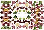 scanned maple leaves in multiplied pattern