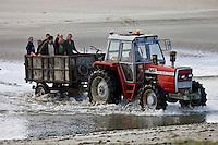 Europe/France/Picardie/80/Somme/Baie de Somme/Le Hourdel: ramassage des coques de La Baie de Somme, à la Pointe du Hourdel