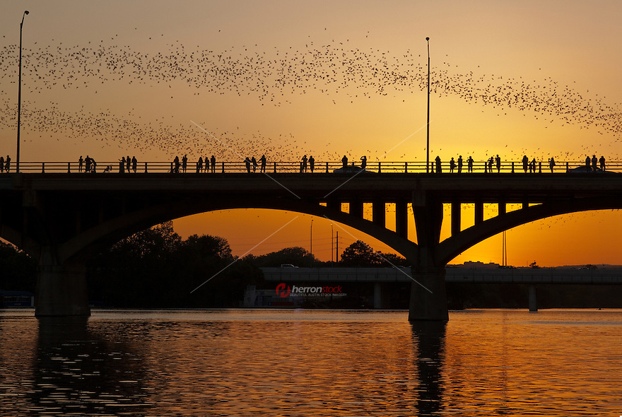 Bat watchers on Austin's Congress St. bridge at sunset. Austin hosts the world's largest urban bat colony. The flying mammals consume an estimated ten- to twenty-thousand pounds of insects each night.