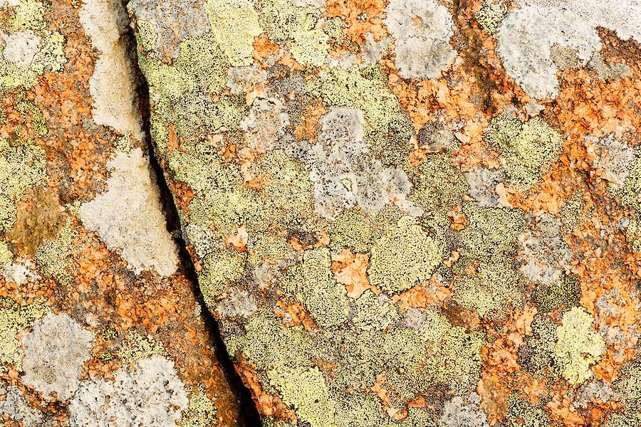 Lichen growing on broken granite rock, Mount Desert Island, Acadia National Park, near Bar Harbor, Maine, USA