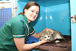 Vetinary Nurse Helen McGlone with a Tom Cat that was found in Inse Bay in Laytown after it was poisoned.  He is now been treated at Westgate Vetinary Clinic...Picture Jenny Matthews/Newsfile.ie