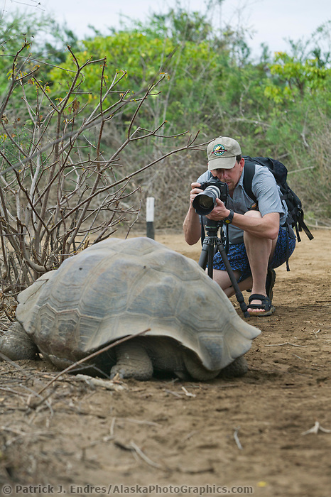 Tourist photographs Giant Galapagos Tortoise, Galapagos Islands, Ecuador