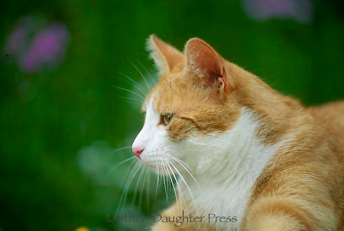 Tabby tiger cat in profile outside in the garden at a peaceful moment