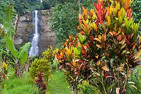 Falls on Luva River, Viti Levu Island, River Canyon with waterfalls and rainforest,  Upper Navua Conservation Area, Fiji    Croton trees
