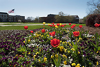 Tulips on Drill Field.<br />  (photo by Megan Bean / &copy; Mississippi State University)