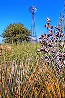 Windmill on the Cimarron National Grassland in western Kansas.
