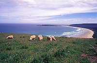 New Zealand,  December 1994  ..New Zealand Catlins..Photo Kees Metselaar