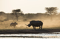 Adult and baby rhino silhouetted