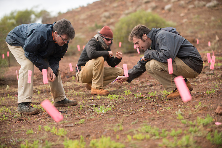 Study into the effects of sed bank soil composition in restoration at the Sinosteel iron ore mine close to Morowa, Western Australia.
