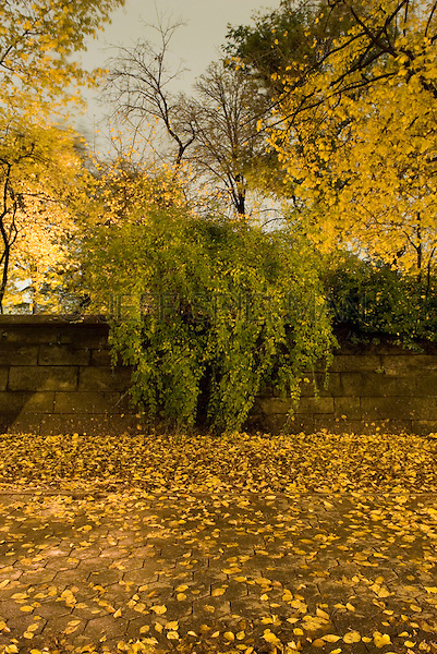 AVAILABLE FROM JEFF AS A FINE ART PRINT.<br /> <br /> AVAILABLE FROM PLAINPICTURE.COM FOR COMMERCIAL AND EDITORIAL LICENSING.  Please go to www.plainpicture.com and search for image # p5690196.<br /> <br /> Trees, Shrub and Stone Wall on Fifth Avenue in Central Park on an Autumn Night, Upper East Side, New York City, New York State, USA