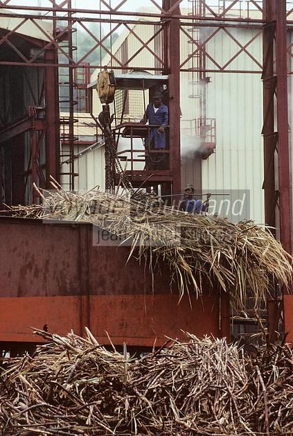 France/DOM/Martinique/Rivière-Pilote/Distillerie La Mauny: Alimentation en cannes à sucre