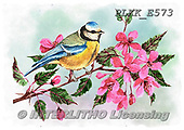 Kris, REALISTIC ANIMALS, REALISTISCHE TIERE, ANIMALES REALISTICOS, paintings+++++,PLKKE573,#a#, EVERYDAY ,birds
