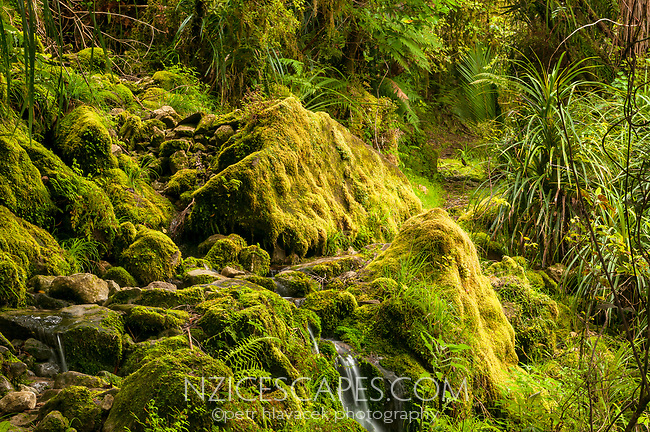 Track through native forest near Punakaiki Cave, Paparoa National Park, Buller Region, West Coast, New Zealand, NZ