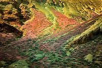 Brome grass (Bromus tectorum) on hillside in Leslie Gultch, Malhuer County, Oregon