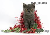 Kim, CHRISTMAS ANIMALS, photos, GBJBWP18120,#XA# stickers