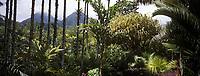 """France/DOM/Martinique/Le Carbet: Pitons du Carbet - """"Palmiers Céléri"""""""