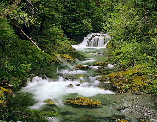 Forest stream and old growth forest, Opal Creek, Cascade Mountains, Oregon.