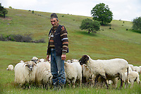 ROMANIA Transylvania, village Sura Mica near Sibiu, shepherd with sheeps  / RUMAENIEN Transsilvanien Siebenbuergen, Dorf Sura Mica, dt. Kleinscheuern, Schafhirte mit Schafherde auf Weide