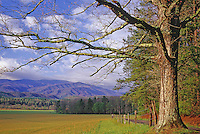 Hyatt Lane wanders past a meadow in Cades Cove, a historic restoration of a mountain community in Great Smoky Mountains National Park in Tennessee