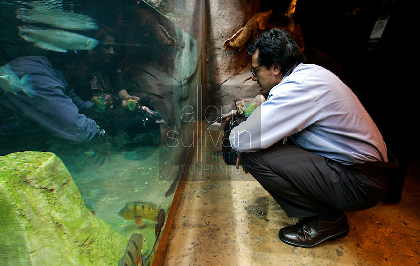 Pedro Garcia of Las Vegas checks out arawana and arapaima the Georgia Aquarium during the opening reception for the annual meeting of the International Association of Exhibition Managers on Tuesday, Nov. 29, 2005. The reception at the Georgia Aquarium was one way to impress on the attendees Atlanta's viabilty as a convention destination.