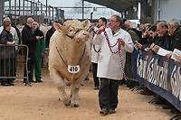 Stirling Bull Sales 2018<br /> Pedigree Charolais Bulls being shown at the Stirling Bull Sales<br /> &copy;Tim Scrivener Photographer 07850 303986<br /> ....Covering Agriculture In The UK....
