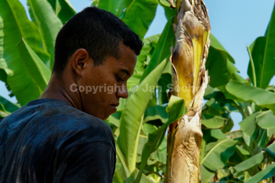A young Colombian worker on the banana plantation in Aracataca, Colombia, 14 March 2006. Eighty percent of the exported bananas in the world are grown in Latin America. Local farms have no other alternative than to sell for a price offered by the multinational company. When working conditions and ecology is in question, the corporations do not have any responsibility as they do not own plantations. Local governments in the attempt of organizing banana export provide low duty taxes on export, they try to eliminate social and enviromental politics to attract the big companies to their countries.