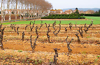 Chateau la Voulte Gasparets. In Gasparets village near Boutenac. Les Corbieres. Languedoc. Vines trained in Gobelet pruning. France. Europe. Vineyard.