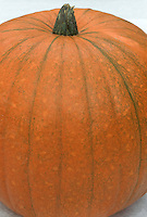 Harvested pumpkin variety 'Spirit, picked and ready to cook or carve.
