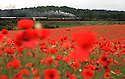2012_06_13_bewdley_poppy_fields