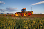 Tractor in a wheat field, Boulder, Colorado,