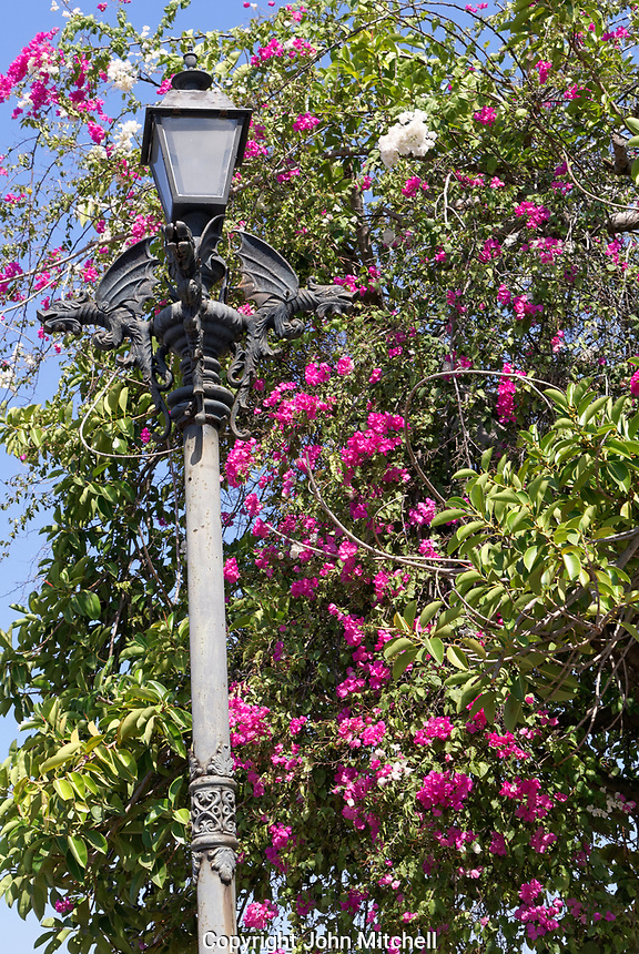 Chinese style dragons decorating a lamp post surrounded by bougainvillea flowers, Old Mazatlan, Sinaloa, Mexico