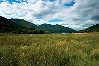 Looking towards Ben Reoch from Glen Loin in the Argyll Forest Park near Arrochar, Loch Lomond & The Trossachs National Park, Argyll & Bute