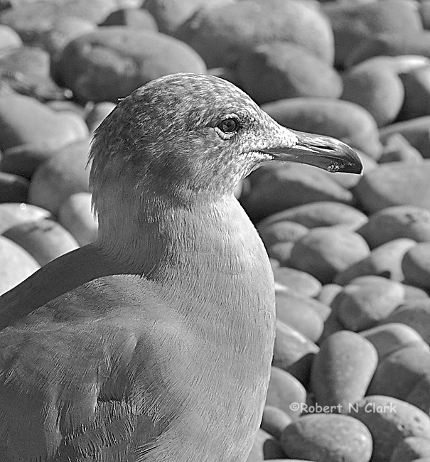 Seagulls on rocky beach, San Elijo State Beach