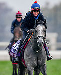 November 1, 2018: Havana Grey (GB), trained by Karl Burke, exercises in preparation for the Breeders' Cup Turf Sprint at Churchill Downs on November 1, 2018 in Louisville, Kentucky. Michael McInally/Eclipse Sportswire/CSM