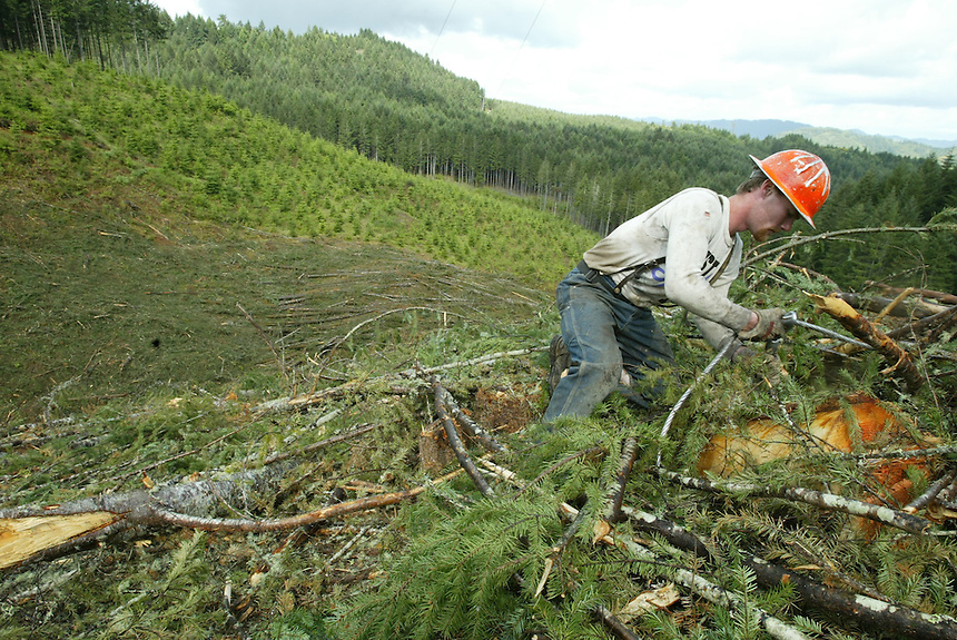 Plikat Logging second rigger Justin Murphy of Glide, Ore., sets a choker on a log on the side of a hill near Anlauf, Ore., Friday May 16, 2003. The log is dragged up the hill by a cable attached to a yarder where it is delimbed and cut to size on a landing near the top of the hill.