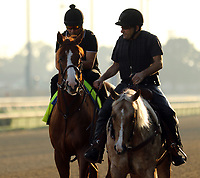 LOUISVILLE, KY -MAY 28: Kentucky Derby and Preakness winner Justify, ridden by Humberto Gomez, prepares to train at Churchill Downs, Louisville, Kentucky, with assistant trainer Jimmy Barnes (on pony Sunny.) (Photo by Mary M. Meek/Eclipse Sportswire/Getty Images)
