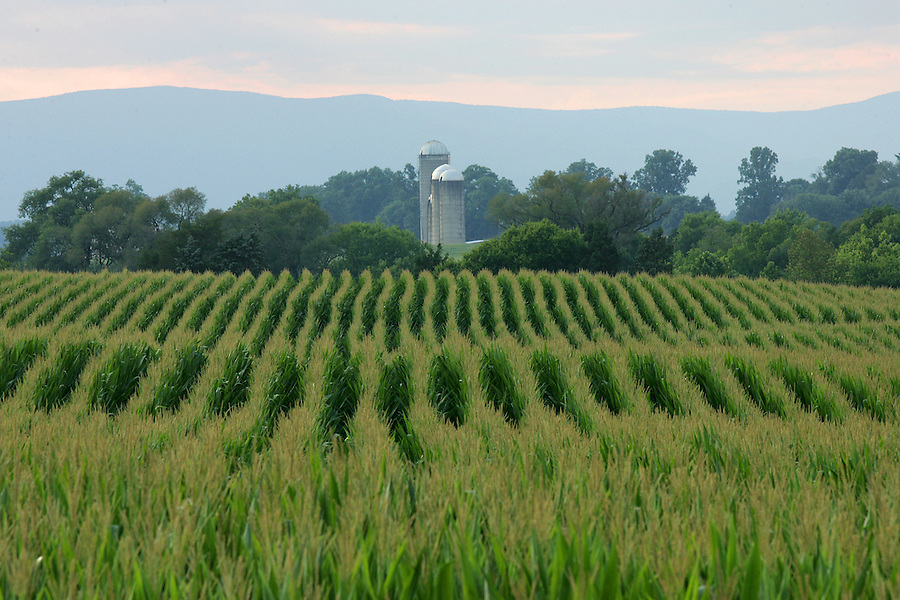 Farmland in Orange County, Virginia. Photo/Andrew Shurtleff