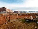 USA; Arizona; Monument Valley, Navajo Tribal Park, sheep at a small Navajo farm