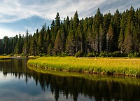 Wind whipped clouds break up the blue summer sky over the forest along the Truckee River in Placer County, California
