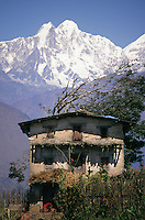 Farming in the Himalayan foothills near Pangtang, in north central Nepal, is a hard struggle and dwellings are primitive but the snow clad peaks provide a glorious backdrop to the farmer's labours.
